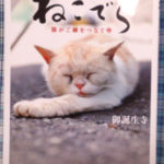 「ねこでら」 御誕生寺の猫の本
