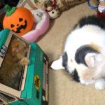 「フェリシモ猫部」のにゃーん麺試食に応募